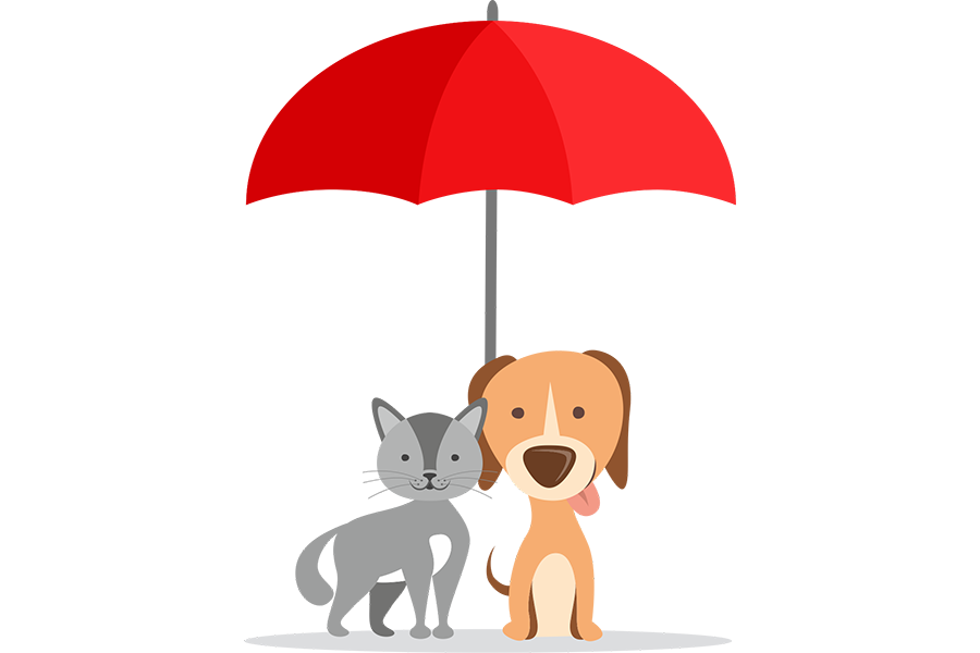 seguro-animal-domestico